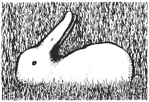 Bunny or Duck Optical Illusion